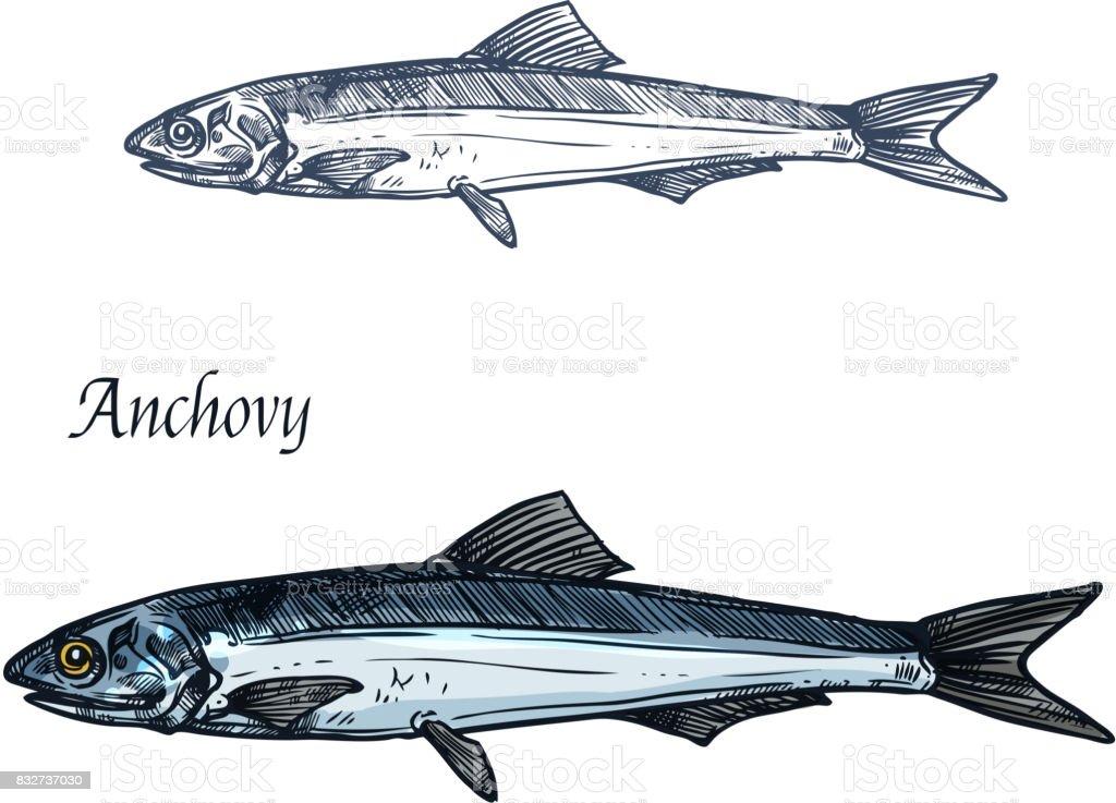 Anchoa pescados aislado boceto para diseño de mariscos - ilustración de arte vectorial