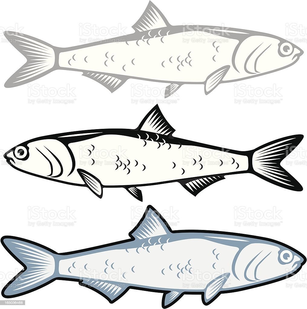 Anchovy royalty-free stock vector art