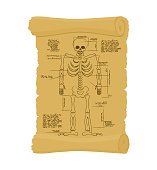 Ancient scroll of skeleton. Archaic papyrus of anatomical Structure of man. Old scheme. Secret Invention of Leonardo da Vinci. Vintage document