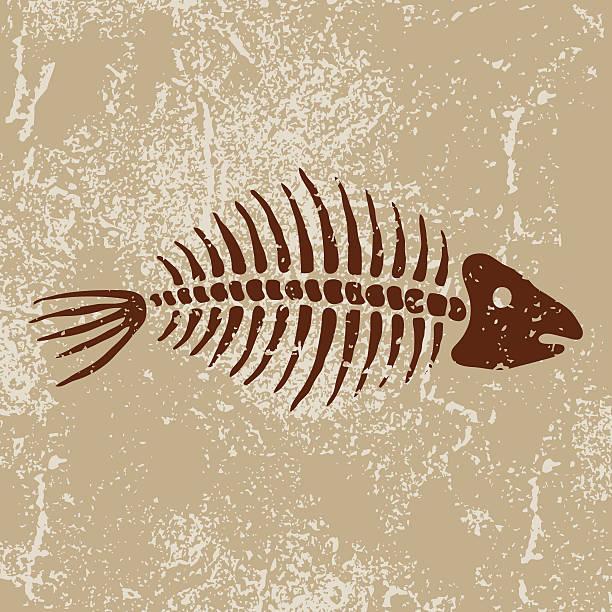 ancient symbols: fish bones - animal bone stock illustrations