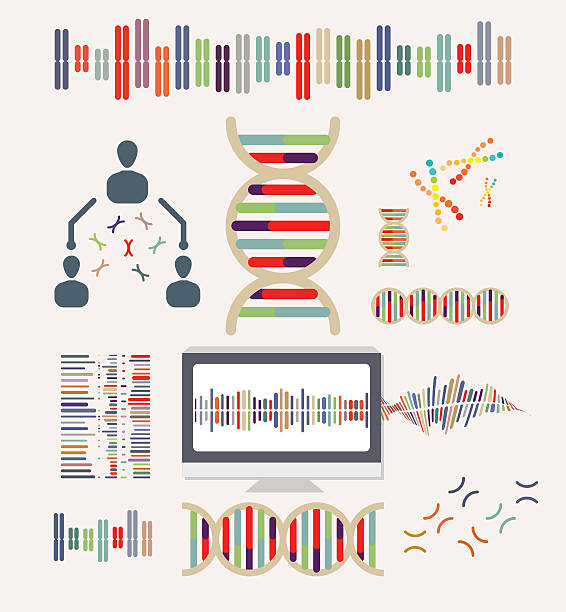 DNA and Chromosomes vector art illustration