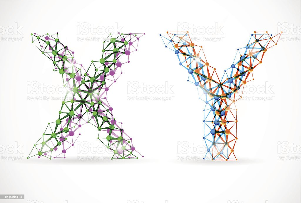 X and Y chromosomes vector art illustration