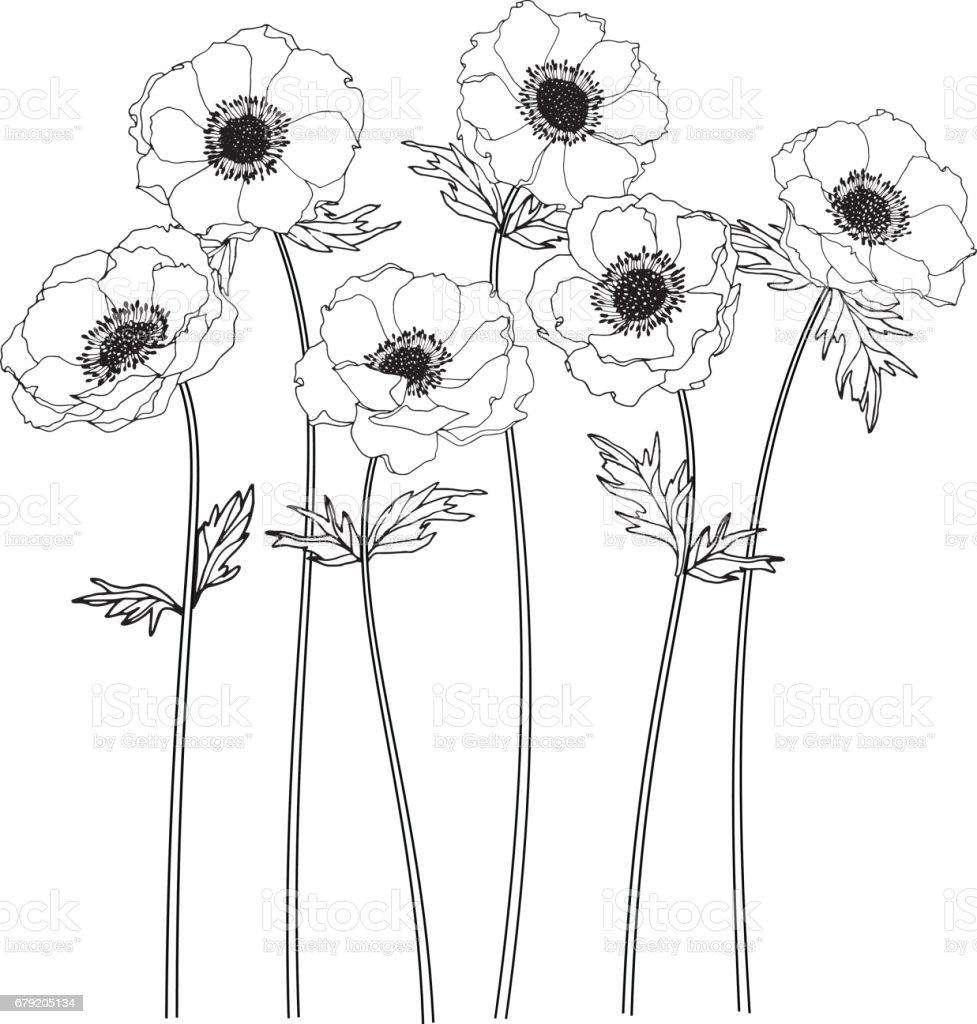 Anemone flowers drawing and sketch with line-art on white backgrounds. anemone flowers drawing and sketch with lineart on white backgrounds – cliparts vectoriels et plus d'images de amour libre de droits