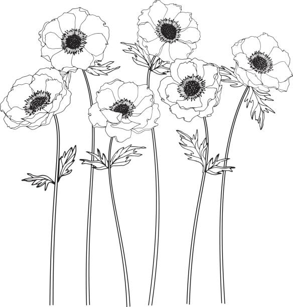 Anemone Flower Illustrations, Royalty-Free Vector Graphics ...