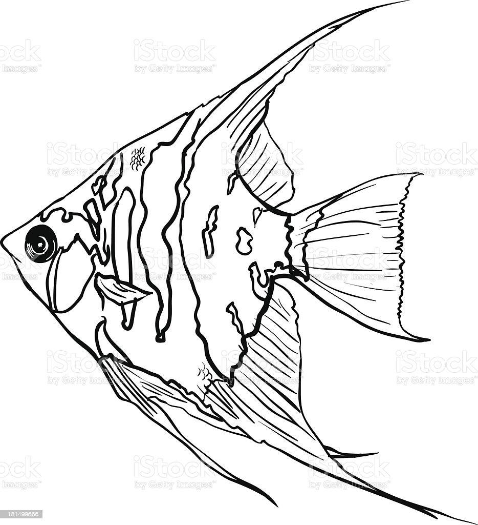 Angel Fish Stock Vector Art & More Images of Amazon Region 181499666 ...