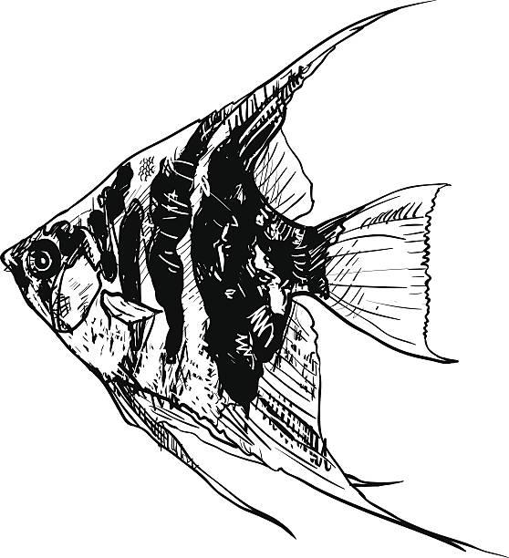 Angel Fish Vector Art Illustration