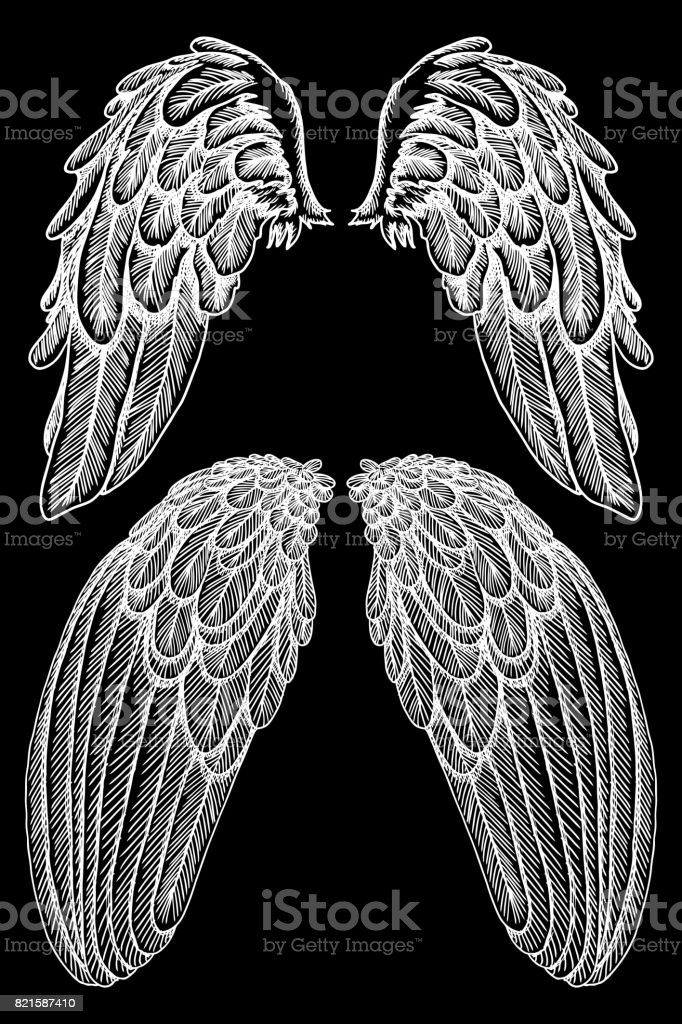 a0460d049 Angel or bird wings set. Sketch isolated vector illustration. - Illustration  .