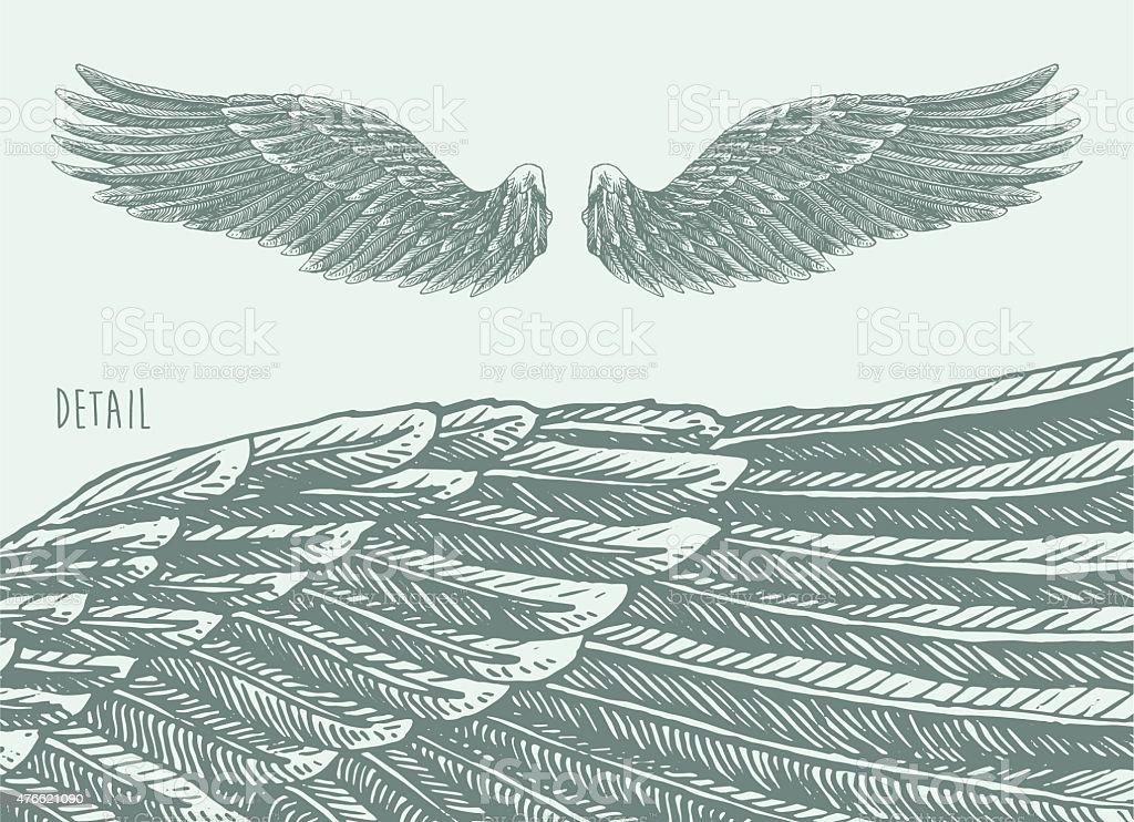 Angel Wings Illustration, Engraved sketch Vector vector art illustration