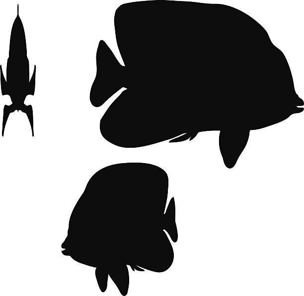 angelfish silhouette Vector Image - angelfish silhouette isolated on white background angel shark stock illustrations