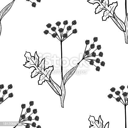 istock Angelica, seamless b-w dd ww herb isol 1312058756