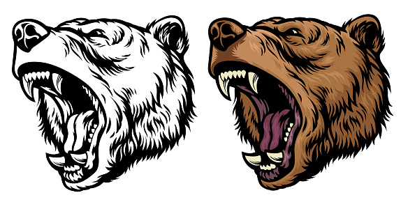 anggry roaring grizzly bear head