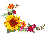 Angled autumn's frame: orange, yellow sunflowers, red roses, gerbera daisy flowers, small green twigs on white background. Digital draw, illustration in watercolor style, vector