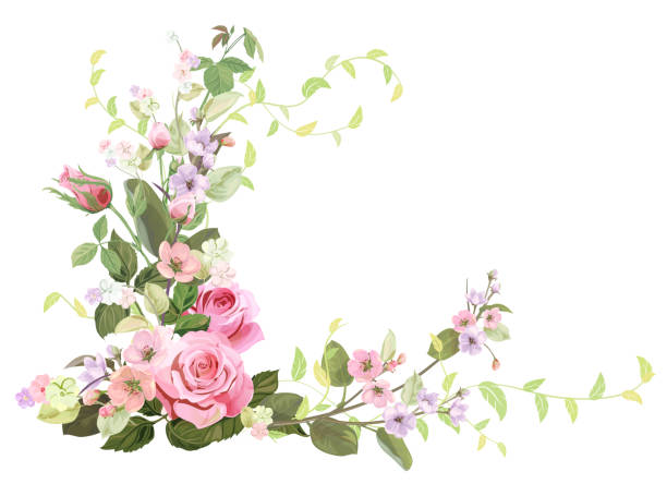 Prune Roses Illustrations Royalty Free Vector Graphics Clip Art