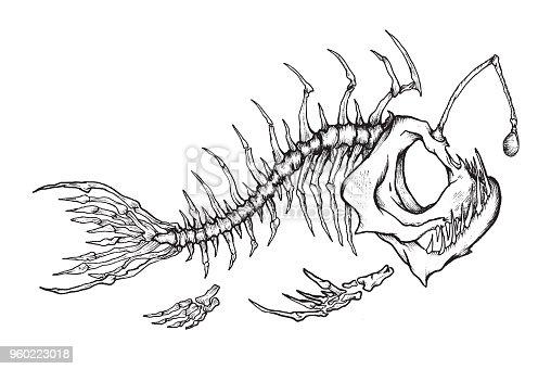 Angler fish skeleton mascot.