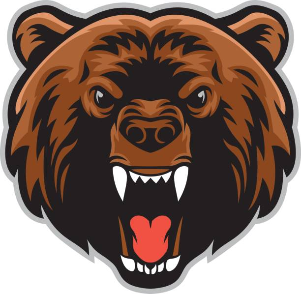 4 651 Grizzly Bear Illustrations Clip Art Istock