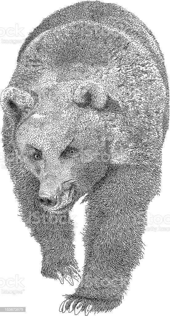 Angry Bear vector art illustration