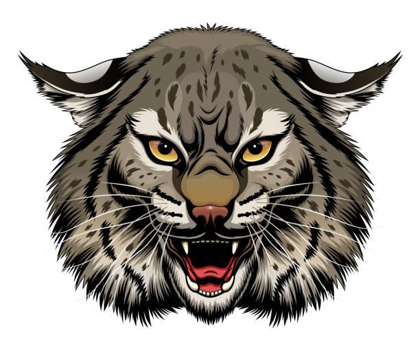 Angry bobcat head Angry stylized bobcat head. Vector illustration. bobcat stock illustrations