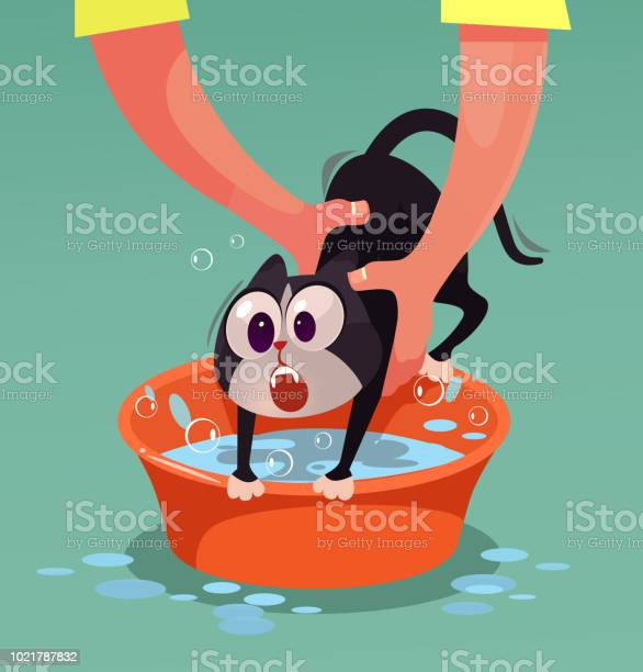 Angry cat character resist and do not want bathing vector flat vector id1021787832?b=1&k=6&m=1021787832&s=612x612&h=flb9bcjrzcscn2jhwldoer609hjpwfmsooygl0oblt0=