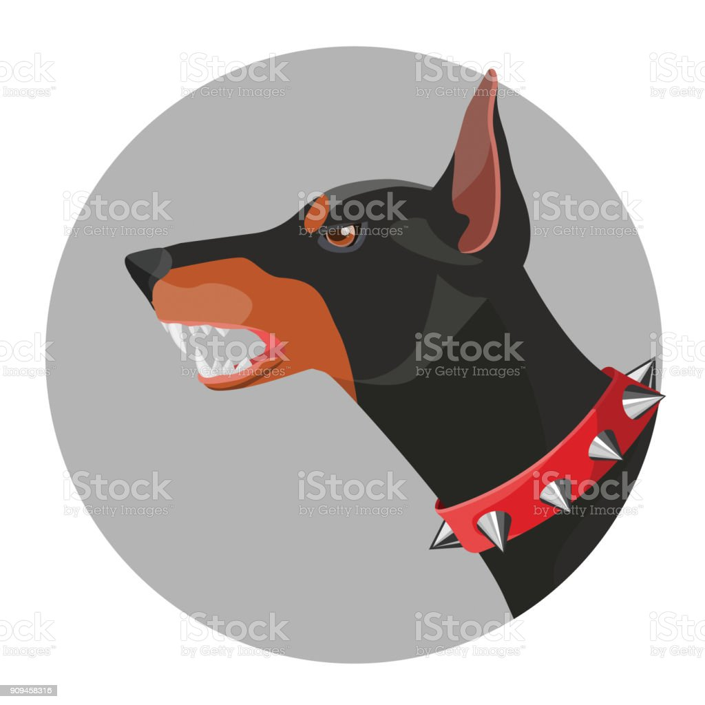 Angry doberman with open mouth and red collar vector art illustration