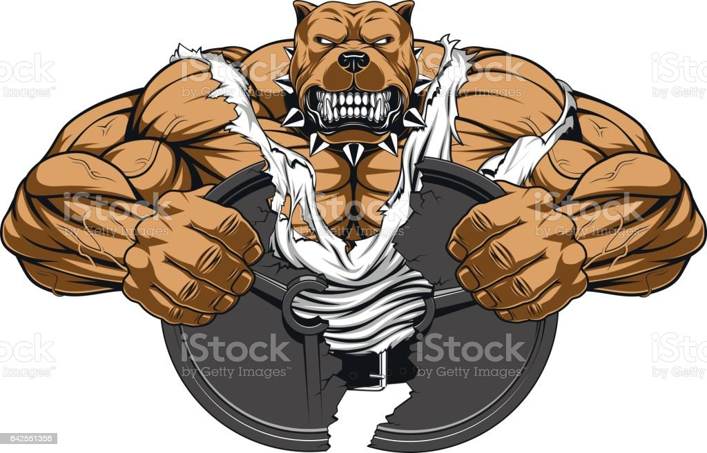 angry dog bodybuilder stock vector art amp more images of
