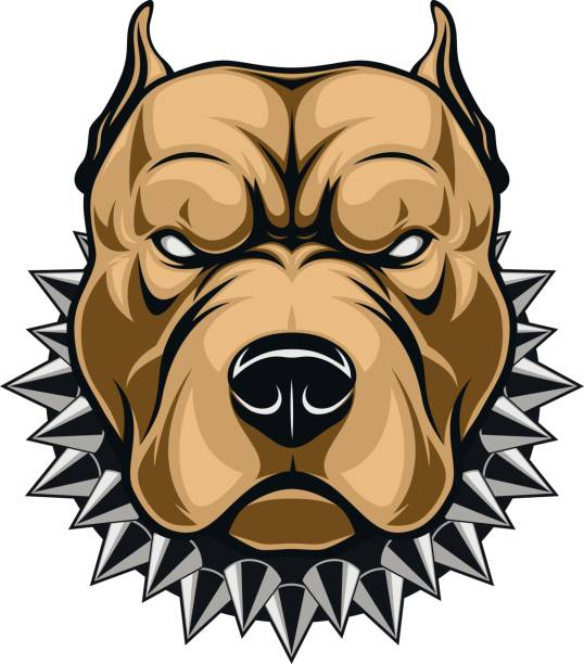 Angry dog head Vector illustration of a head of a spiteful pit bull, on a white background aggression stock illustrations