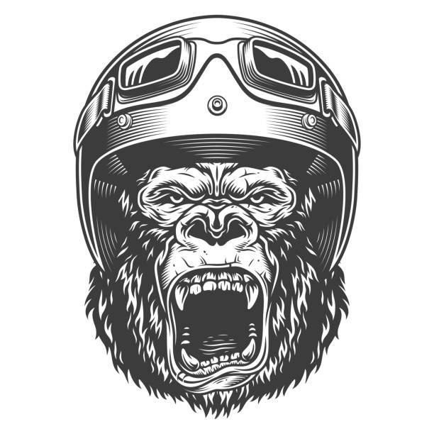 illustrations, cliparts, dessins animés et icônes de gorille en colère dans le style monochrome - moto sport