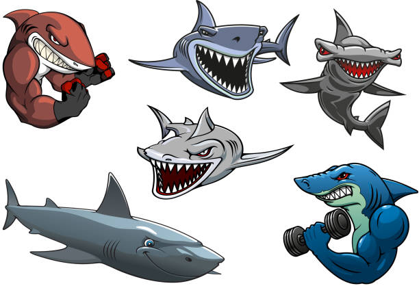 Angry grey, white and hammerhead sharks cartoon characters Cartoon angry dangerous sharks characters including sporting sharks, hunting grey, white and hammerhead sharks isolated on white background human jaw bone stock illustrations