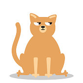 Angry grumpy cat flat vector