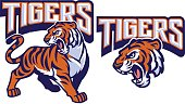 vector of angry tiger mascot