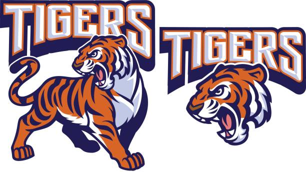angry tiger mascot - high school sports stock illustrations