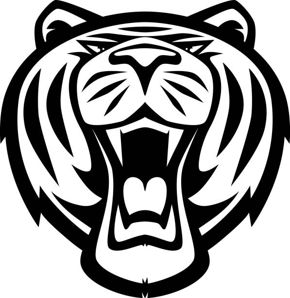 Best Black And White Tiger Face Clip Art Illustrations ...