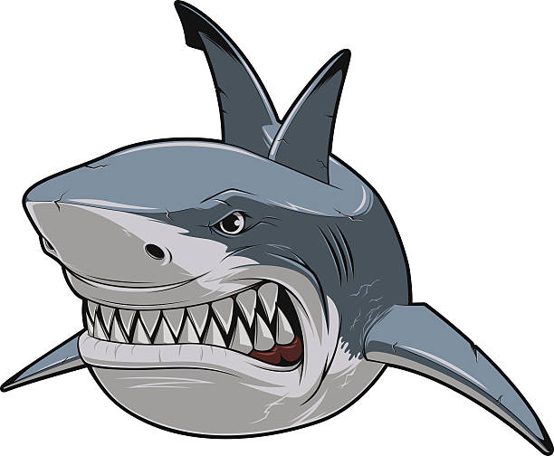 Angry white shark Vector illustration, toothy smiling white shark swims great white shark stock illustrations