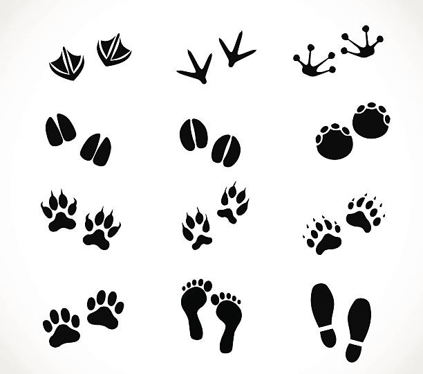 Cow Hoof Illustrations, Royalty-Free Vector Graphics ...