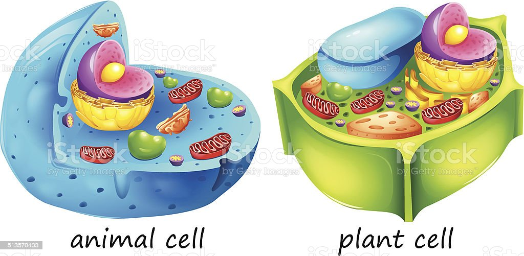 Animal and plant cells vector art illustration