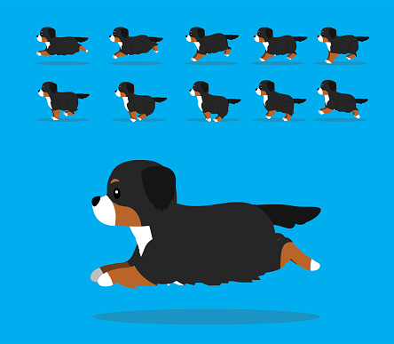 Animal Animation Sequence Dog Bernese Mountain Dog Cartoon Vector