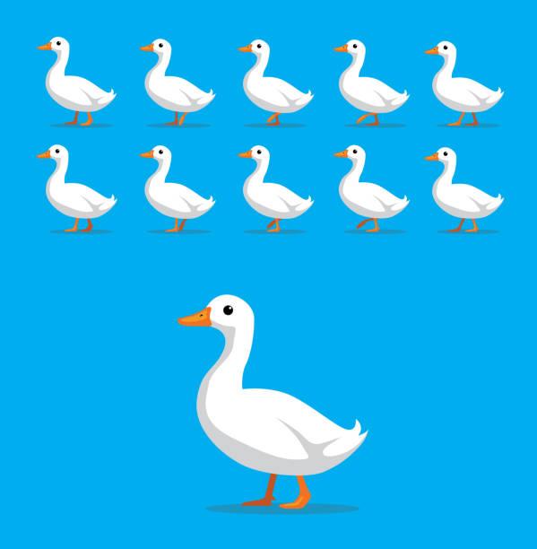 Animal Animation Sequence White Duck Cartoon Vector Cartoon Animation EPS10 File Format duck stock illustrations