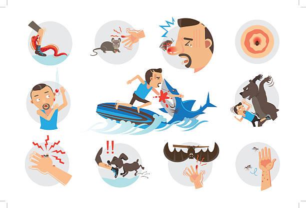 Animal Bites Animal Bites Wild Animal Attacking Hurting Human.Cartoon vector, illustrations stinging stock illustrations