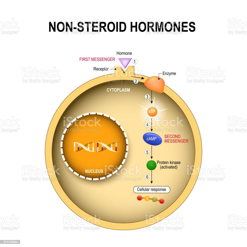 Ilustrao de clula animal com ncleo citoplasma dna fermentos clula animal com ncleo citoplasma dna fermentos protena quinase ilustrao de clula ccuart Choice Image