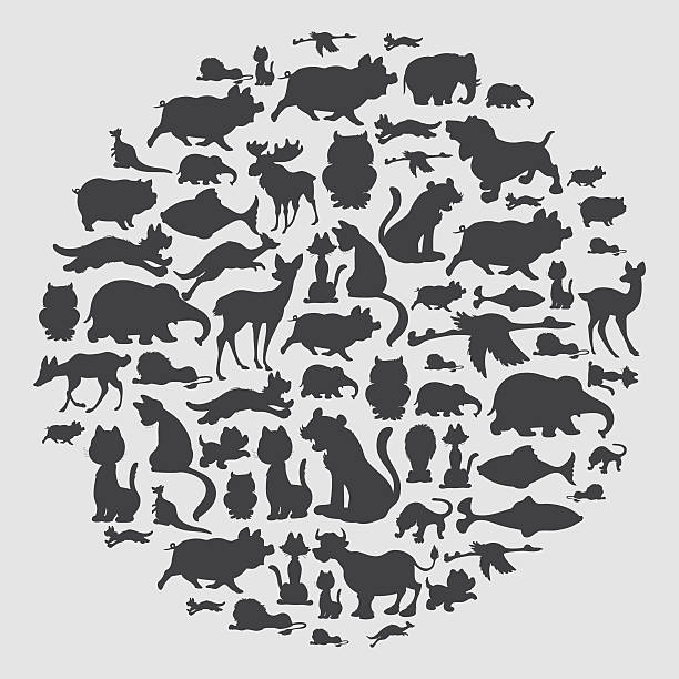 stockillustraties, clipart, cartoons en iconen met animal circle pattern - kat