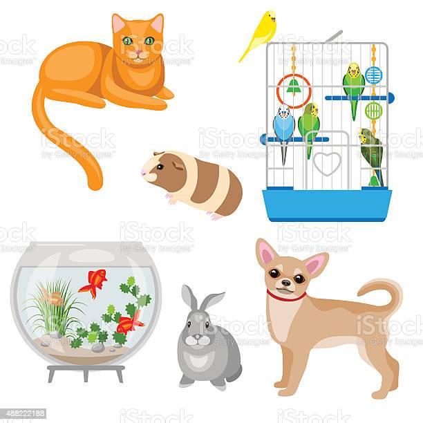 Animal companions set vector id488222188?b=1&k=6&m=488222188&s=612x612&h= ibx3qwxnk qlxzqcxih4jcv3dulebpkmsxihfpf8gg=