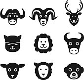 animal face icon set series