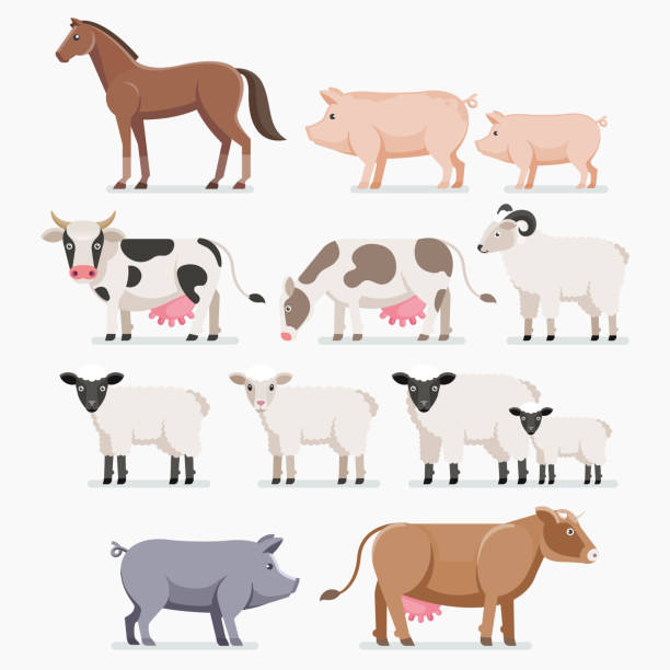 animal farm set. the horse pig cow goat and sheep. - 돼지 새끼 stock illustrations