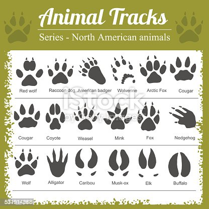 Animals Footprints - North American animals - vector set