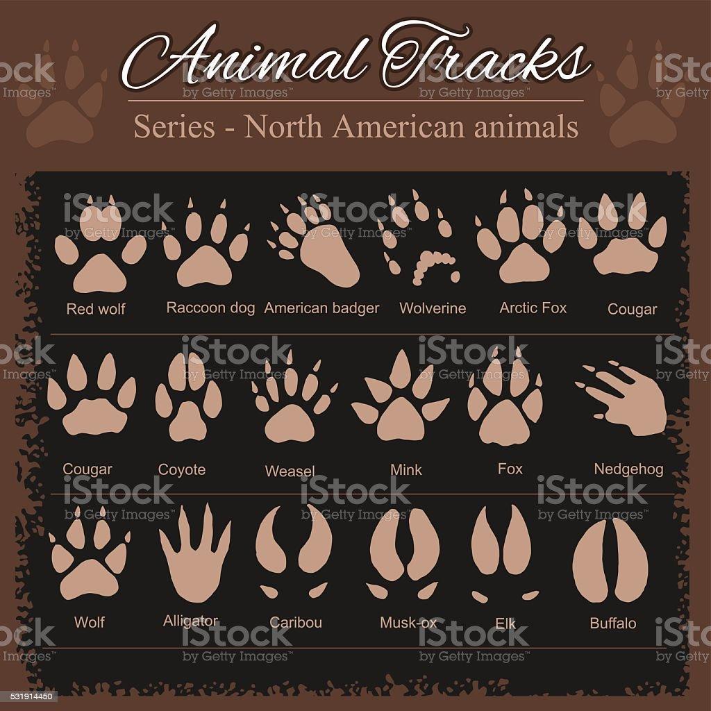 Animal Footprints - North American animals vector art illustration