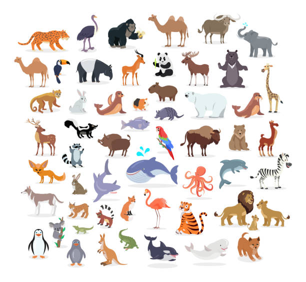 Animal Full Length Portraits Collection on White Animal full length portraits collection on white. Vector poster of domestic and wild animals from various countries, lion family, green alligator, colourful parrot on branch, whale splashing water animal stock illustrations