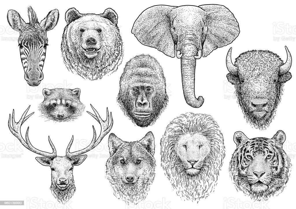Animal head collection illustration, drawing, engraving, ink, line art, vector vector art illustration