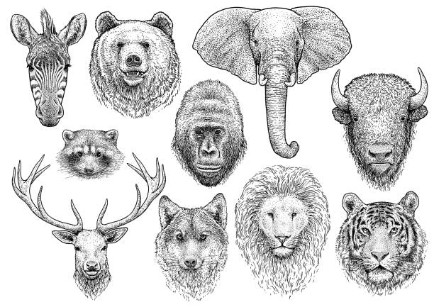 animal head collection illustration, drawing, engraving, ink, line art, vector - elephant stock illustrations