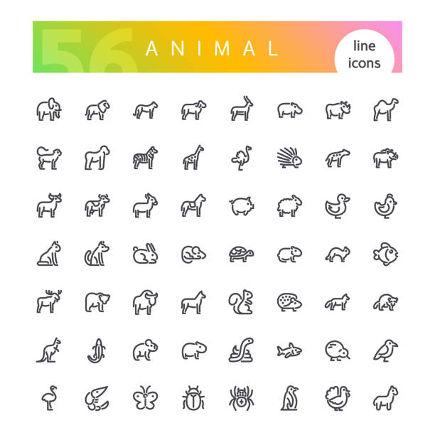 Animal Line Icons Set Set of 56 animals from africa, australia, forest, sea, mammals, birds, reptiles, fish, insects and other line icons suitable for web, infographics and apps. Isolated on white background. Clipping paths included. kangaroo stock illustrations