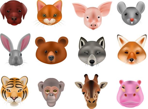 tiermaske vektor animalische maskierung gesicht von wilden zeichen tragen wolf kaninchen und hund oder katze auf maskerade abbildung maskiert karneval kostüm affe masquer isoliert auf weißem hintergrund - giraffenkostüm stock-grafiken, -clipart, -cartoons und -symbole