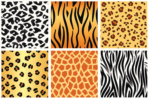 ilustrações de stock, clip art, desenhos animados e ícones de padrões de animais - padrões zebra